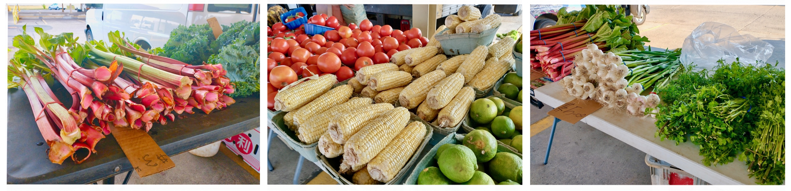 MinneCulture | Hmong Farmers Find Their Midwest Footing